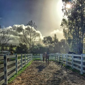 Paddock at CA Farm